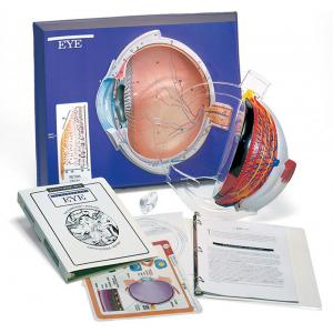 EYE MODEL ACTIVITY SET