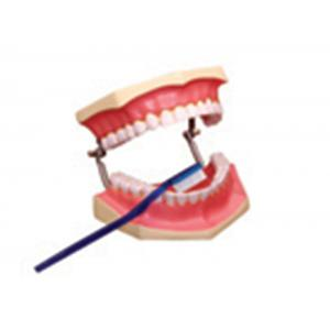 HUMAN DENTAL CARE, SMALL SIZE